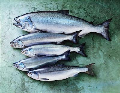 Varieties of Salmon