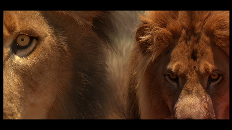 Top 10 Kitties in Cinema – Big Cats Edition