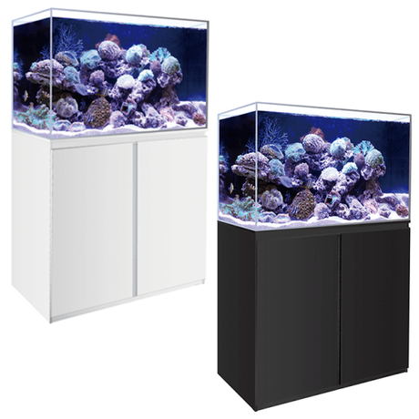 Top 3 Reasons Why You Need a Fish Tank Now