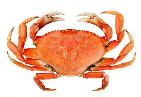 Dungeness crab vs snow crab