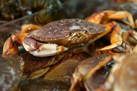 Acidification of The Pacific Ocean Even Dissolves Shells of Dungeness Crabs