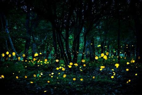 Habitat Loss, Insecticides And Light Pollution Are Posing Threat To The Beloved Fireflies