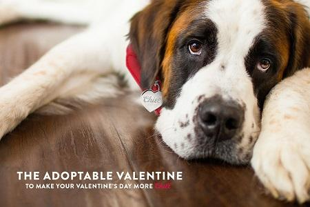 Coors Light Wants to Make a Canine Your Valentine This Year