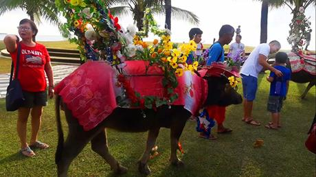 carabao parade