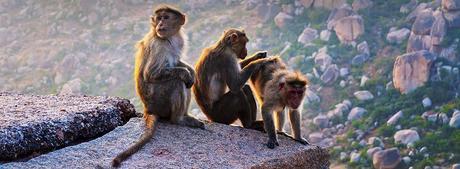 Wild Adventure Tours in India 2020