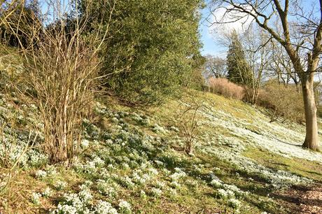 Snowdrops at Easton Walled Gardens