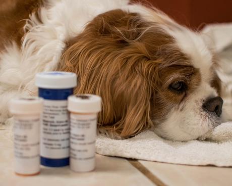 How Pet Insurance Covers Heart Failure