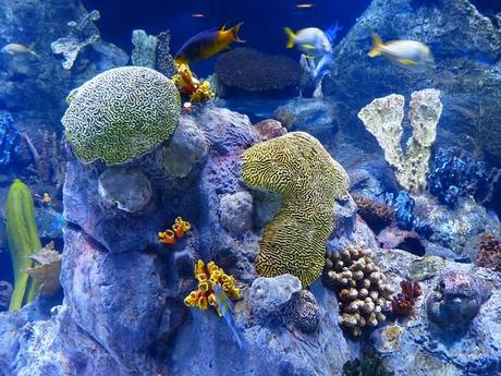 reef-coral-reef-sponges-aquarium