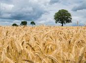Advantages Disadvantages Monoculture Farming