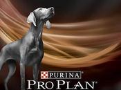 Phosphorus Foods Dogs With Kidney Failure