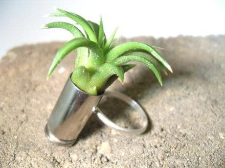 Trends: Air Plants in Rings, Necklaces, etc. What do we think?...