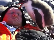 Viral Video: Baby Penguin's First Encounter with Human Captured Video