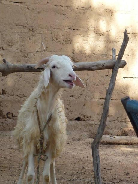 Expat Trouble: Two Dutchmen and a Mali Sheep