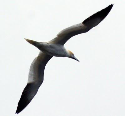 Seaside Sunday: seabirds from the archives