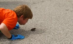 North Judson Mint Festival Frog Jumping Contest