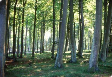 A Pressing Need For Afforestation
