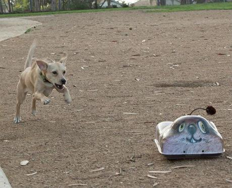 Remote-controlled Toy for Dogs