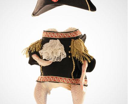 A chicken dressed as Napoleon