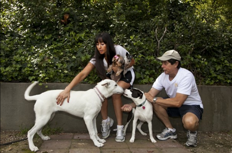 DogVacay Website Finds Temporary Homes for Dogs