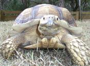 Lost Tortoise Reunited With Family