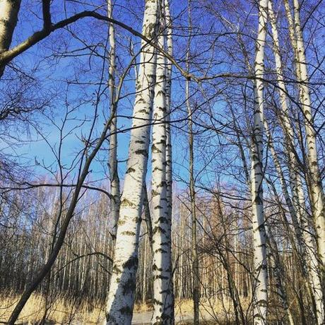 Inspiration. My trip to Finland gave me some of the best of nature that winter has to offer. Much of the countryside was dense with birch trees which reminded me of a magical place from my childhood in Scotland. In turn, this inspired my new...