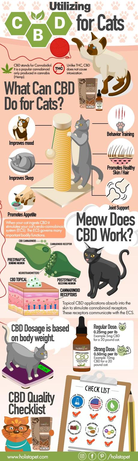 Utilizing CBD for Cats