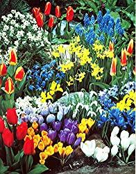 Image: A Complete Spring Garden - 50 Bulbs for 50 Days of Continuous Blooms, by Hirts: Bulbs