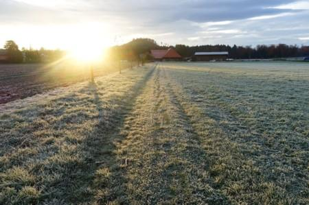 Transitions – Meditative Morning Walks over a Field