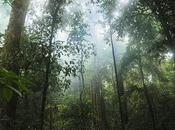 Scientists Warn Amazon Rainforest Could Vanish Decades Once Reaches Ecological Tipping Point