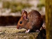 Things Help Avoid Rodents