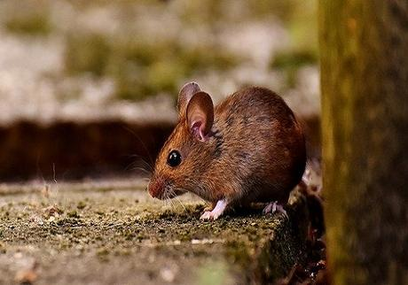 5 Things You Can Do To Help Avoid Rodents