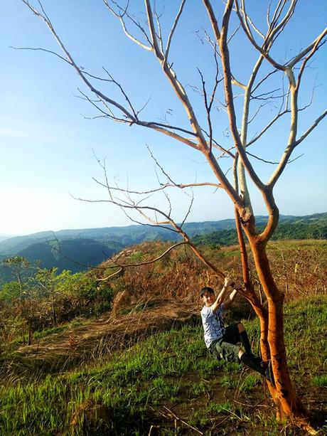 photogenic dead tree