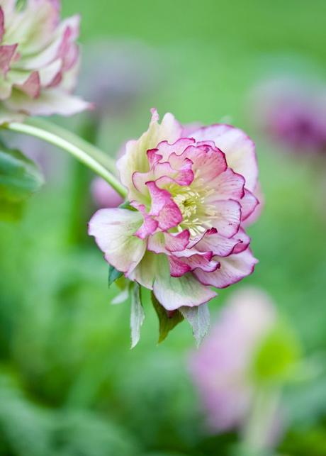 Garden Jobs I Will Be Doing This Week