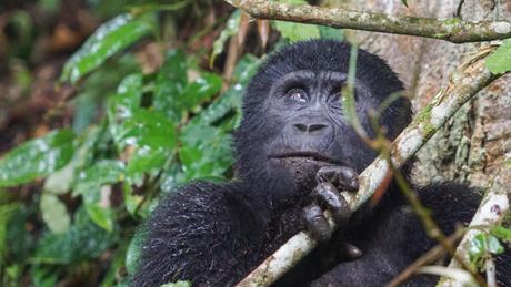 15 Photos to Enjoy a Virtual Trip to Uganda