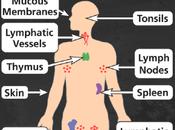 Healthy Habits Immunity Prevent Getting Sick