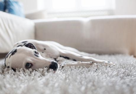 5 Ways to Remove Pet Stains and Odours Naturally