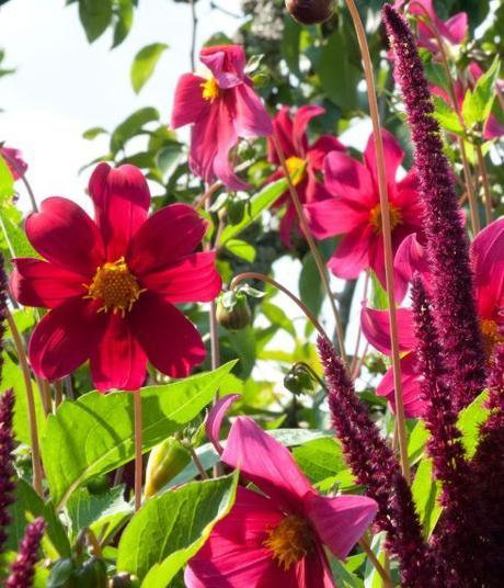 Getting your gardening fix