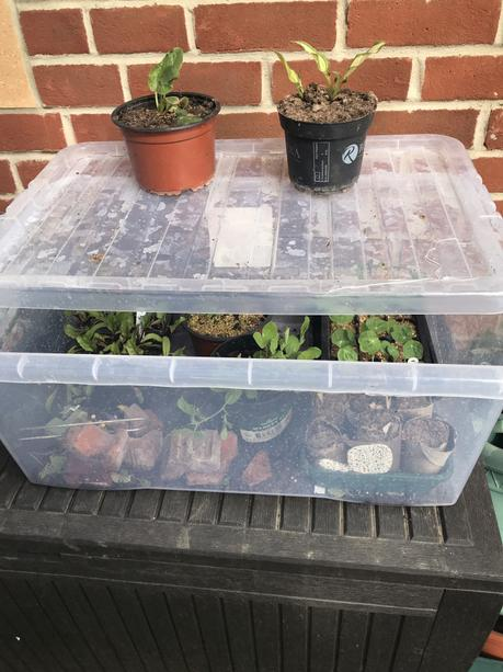 An alternative to my allotment