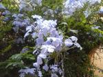 House Gardens: the magical escape