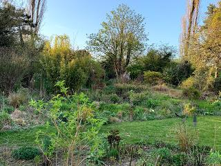 A letter to the garden: April 2020
