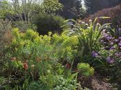 Front Garden Bringing