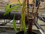 Irritating Plant Month February 2020
