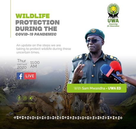 Uganda Wildlife Authority goes live on Facebook to discuss wildlife protection during the pandemic