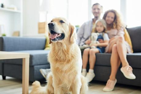 Carbon Monoxide & Our Pets – A BestHeating Guide