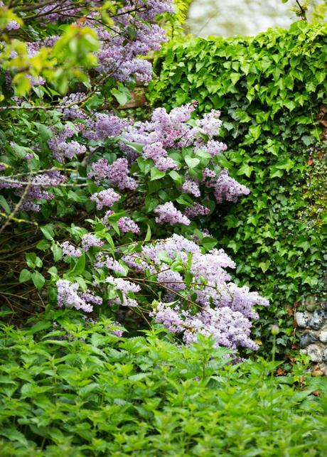In My Greenhouse In April