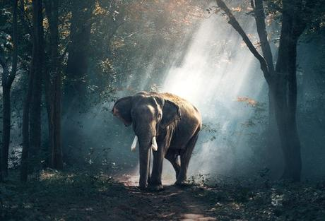 view-of-elephant-in-forest