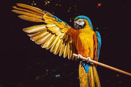 Top 15 Longest Living Animals on Earth