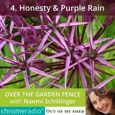 Honesty and Purple Rain, Podcast No.4