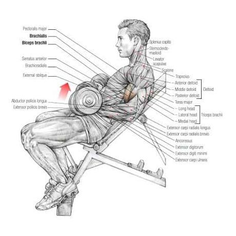 Best Weightlifting Books - Strength Training Anatomy - Third Edition