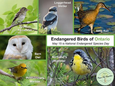 May 15 is Endangered Species Day: Extirpated species in Ontario